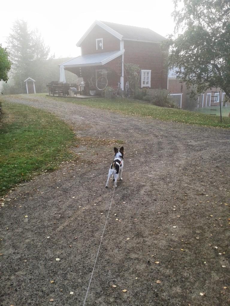 Koira syksyllä