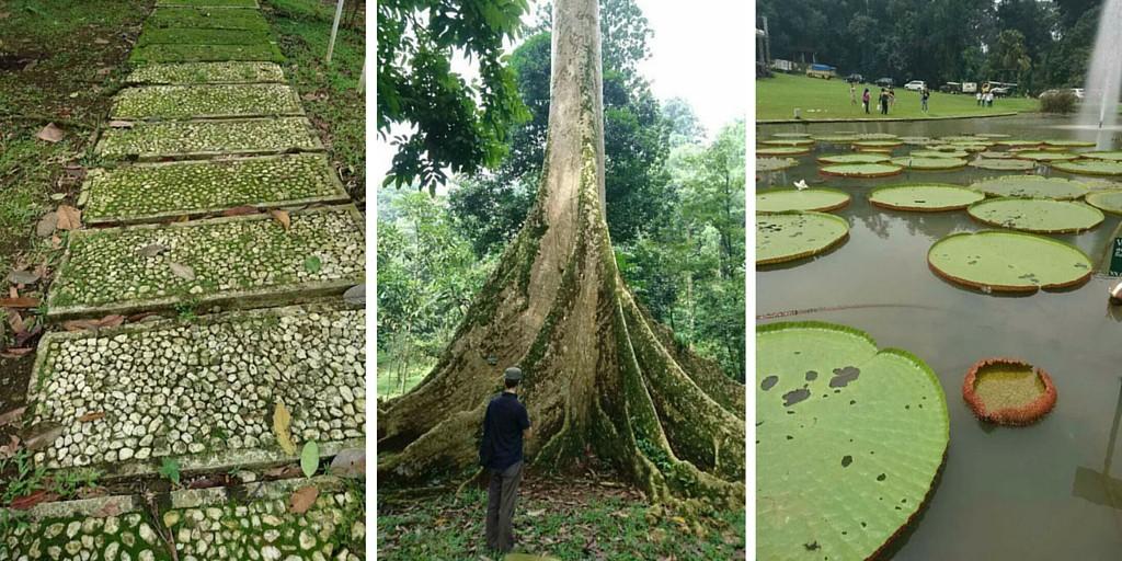 Bogorin kasvitieteellinen puutarha