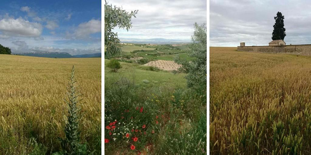 Upeita maisemia Caminon varrella